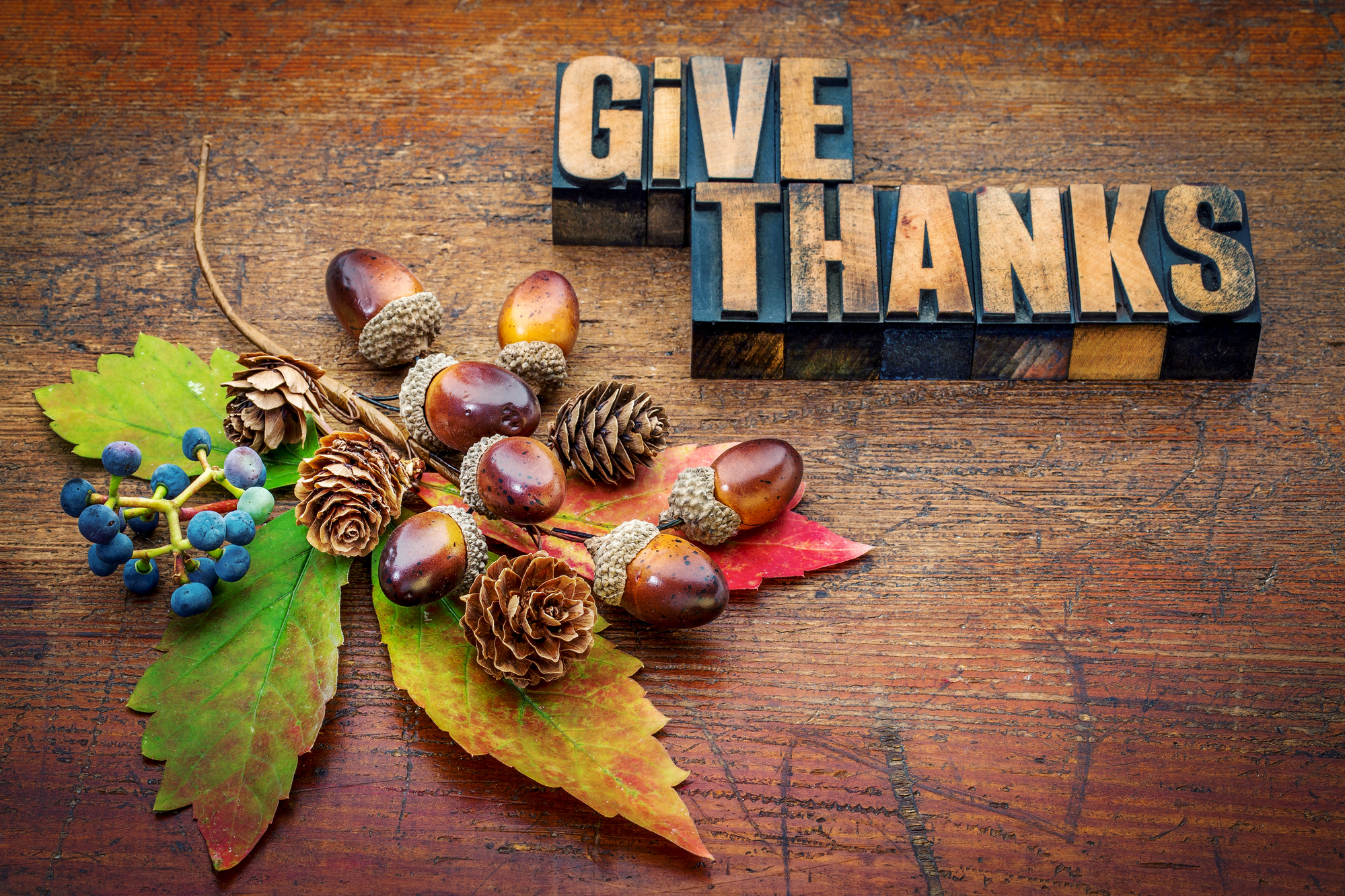 Thanksgiving is More Than Just a Day