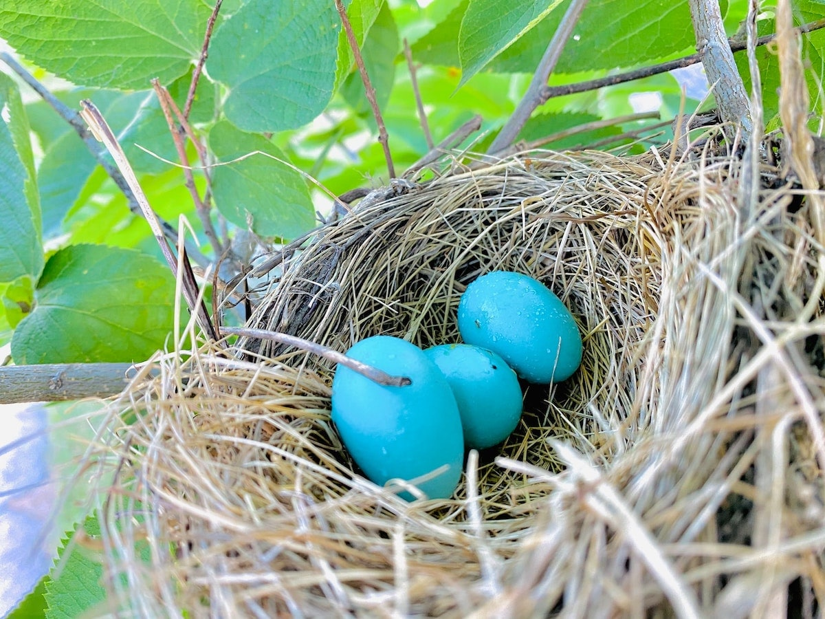Seven Strategies to Help You Build A Bigger Nest Egg - Even if You're Playing Catch-Up